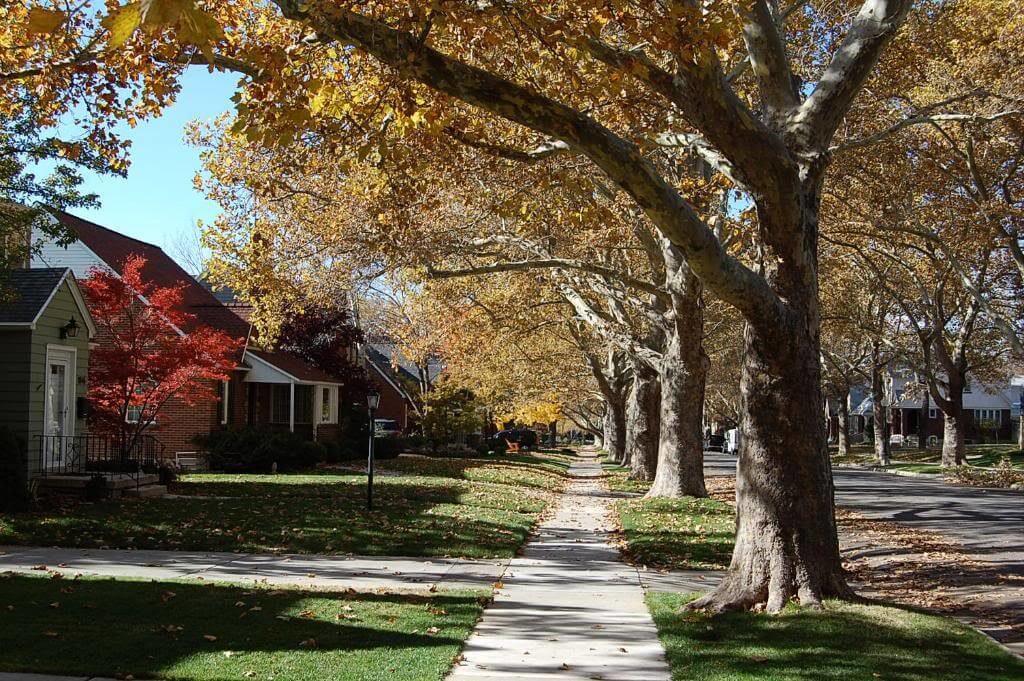Tree-lined street in Yalecrest, SLC