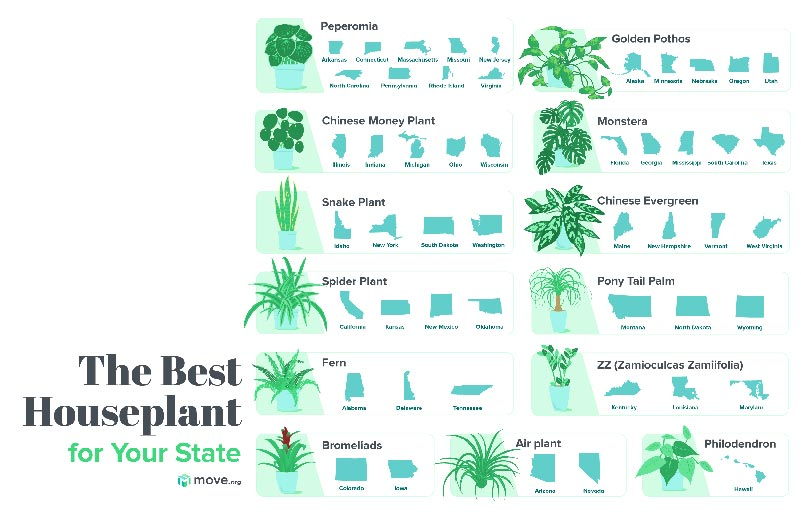 Best House Plants for your state Illustrated